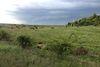 Земля сельскохозяйственного назначения в селе Среднее, площадь 87 соток фото 6