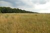 Земельный участок сельскохозяйственного назначения в Тыврове, площадь 1 Га фото 6