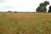 Земельный участок сельскохозяйственного назначения в Тыврове, площадь 1 Га фото 8