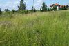 Земля сельскохозяйственного назначения в селе Лука-Мелешковская, площадь 20 соток фото 2