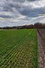 Земля сельскохозяйственного назначения в селе Рубченки, площадь 25 соток фото 4