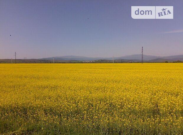 Земля сельскохозяйственного назначения в селе Белоусовка, площадь 600 соток фото 2