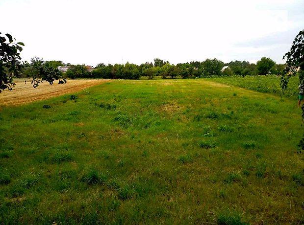 Земля сельскохозяйственного назначения в селе Низшая Дубечня, площадь 25 соток фото 1