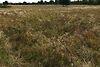 Земля сельскохозяйственного назначения в селе Низшая Дубечня, площадь 4 Га фото 4