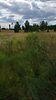 Земля сельскохозяйственного назначения в селе Старые Петровцы, площадь 12 соток фото 5