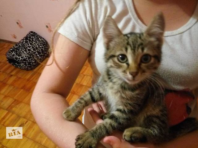 купить бу 1,5 месячная кошечка ищет семью в Виннице