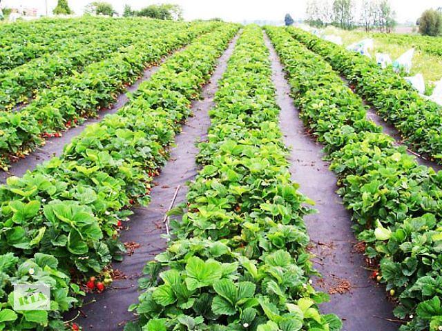 продам Агроволокно чёрное 50 г/м² и 60 г/м² мульчирующее бу в Киеве