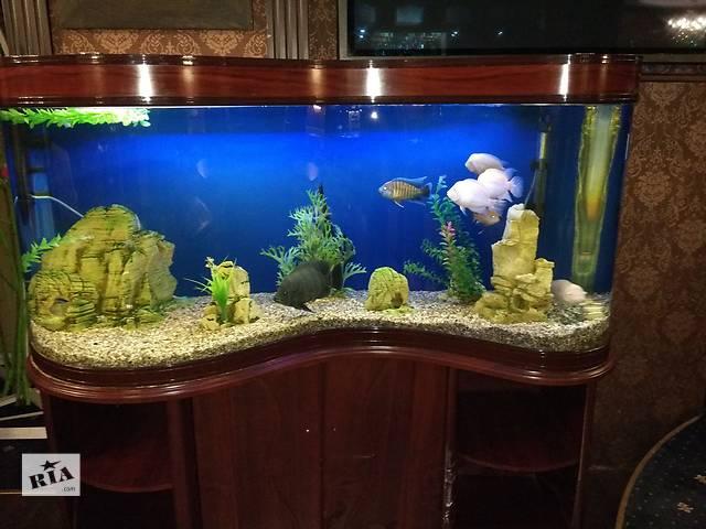 купить бу Аквариум Minjiang (волна) 430 л с рыбками, полная комплектация в Киеве