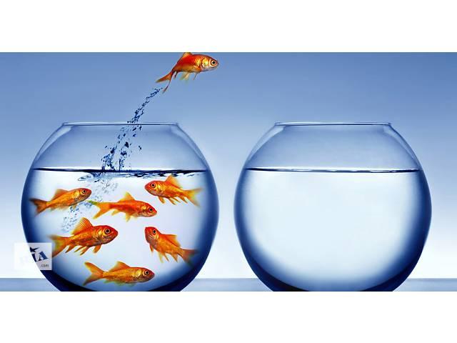 аквариум- объявление о продаже  в Киеве