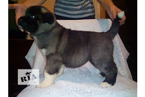 купить бу Собаки, цуценята в Дніпропетровську Вся Україна