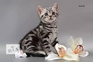 Американские кошки