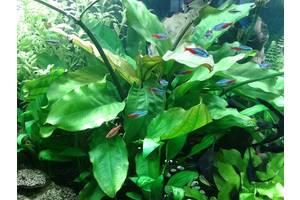 Живые растения для аквариумов