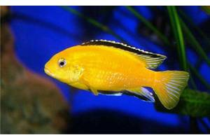 Аквариумные рыбы
