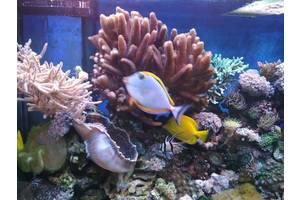 Морські акваріуми