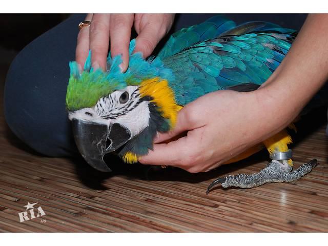 Сколько стоит большой попугай ара