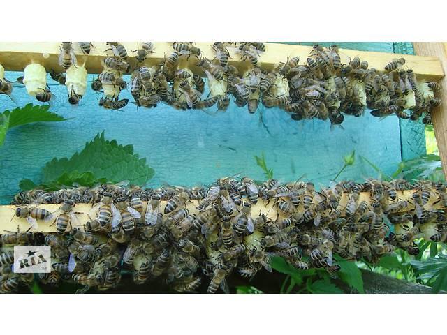 бу Бджолине маточне молочко, квітковий пилок, мед  в Украине