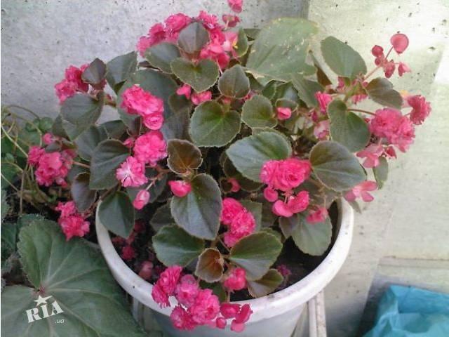 цветы комнатные фото смотреть: