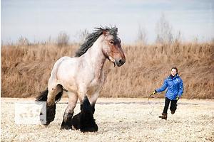 бу Другие животные в Мариуполе Вся Украина