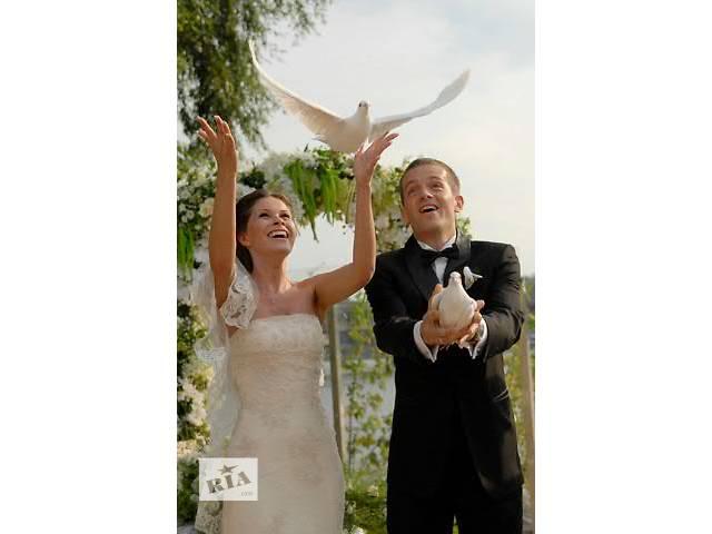 купить бу Белые голуби на свадьбу в Киеве