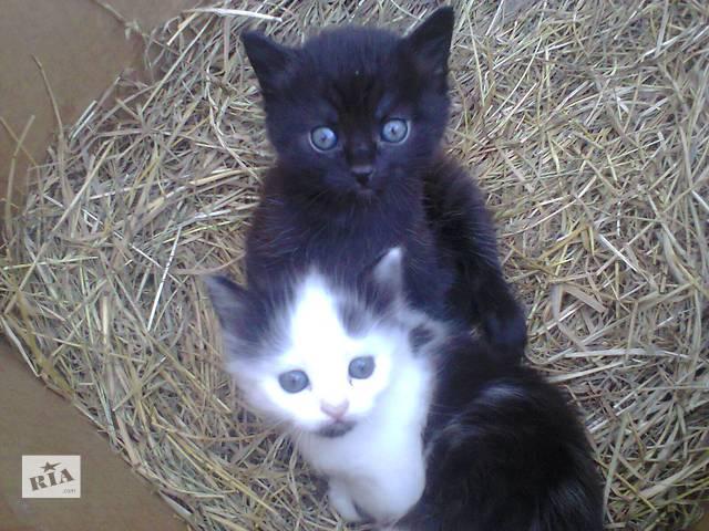 купить бу Бесплатно котята в Ровно