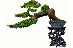 Новые Вечнозеленые растения