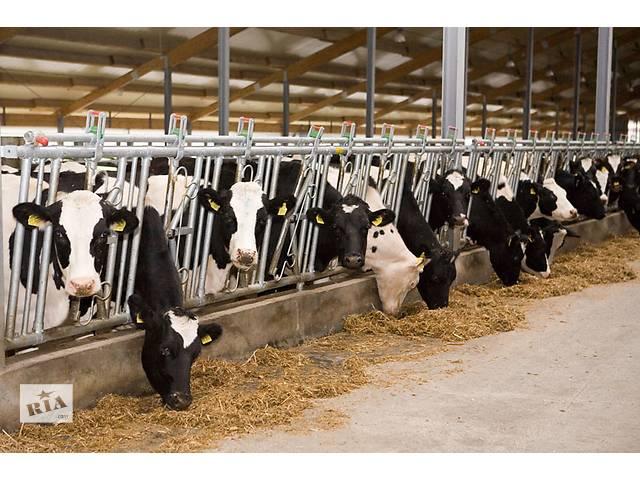 Бизнес план молочной товарной фермы- объявление о продаже   в Украине