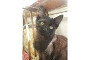 Cмышленый черный котенок ищет дом