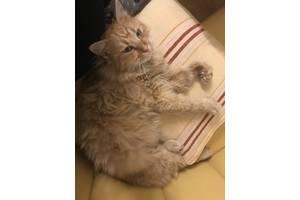 Кошки, коты, котята