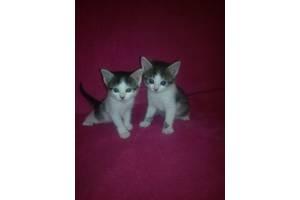 Подарую дві маленьких кішечки.