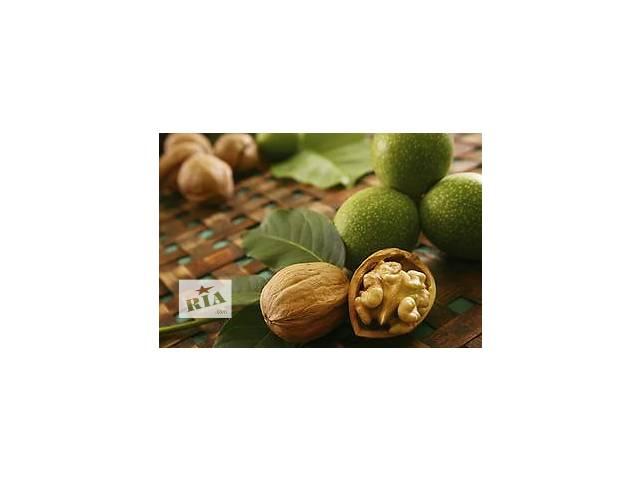 Cаженцы грецкого ореха в винницкой области- объявление о продаже  в Виннице