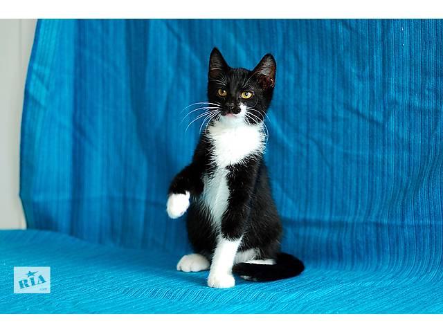 купить бу Чарли, четырехмесячный котик. в Киеве