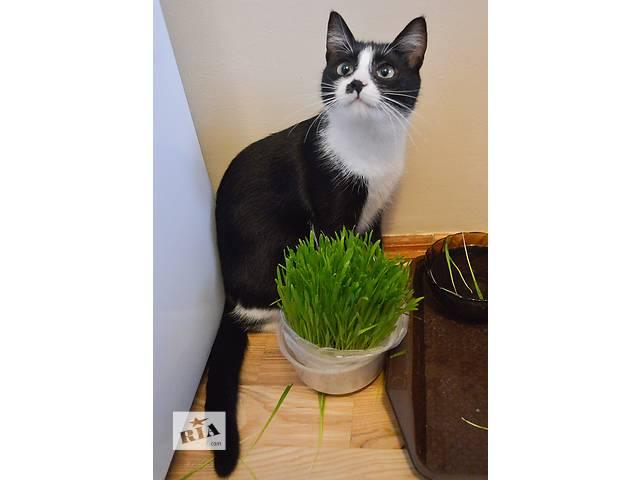 Черно-белый котенок ищет дом- объявление о продаже  в Киеве