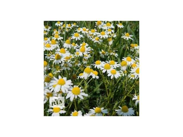 купить бу Ромашка лекарственная (цветы) 50 грамм в Чернигове