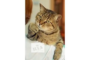 Чудесный, контактный кот Жора ищет семью!