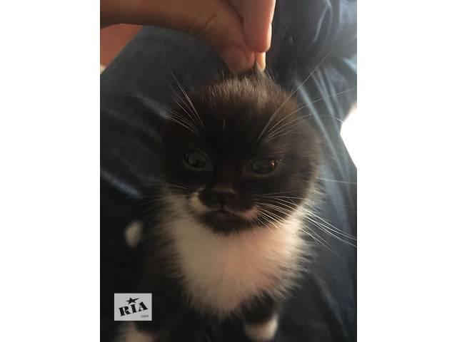 бу Замечательный котенок ищет заботливых хозяев в Львове