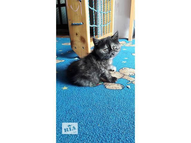 Чудове кошеня- объявление о продаже  в Днепре (Днепропетровск)