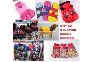 Одежда для животных