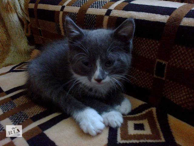 Дарим котёнка- объявление о продаже  в Николаеве