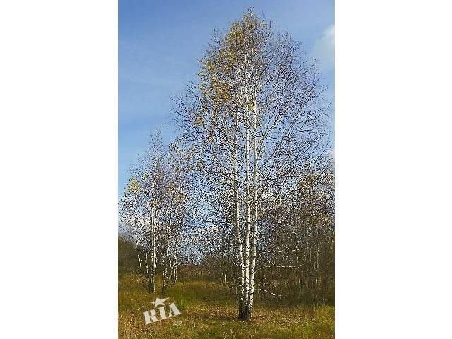 саженцы деревьев: берёза, дуб красный, клены, липы, рябина, черемуха, граб, ясень, каштан, акация- объявление о продаже  в Киеве