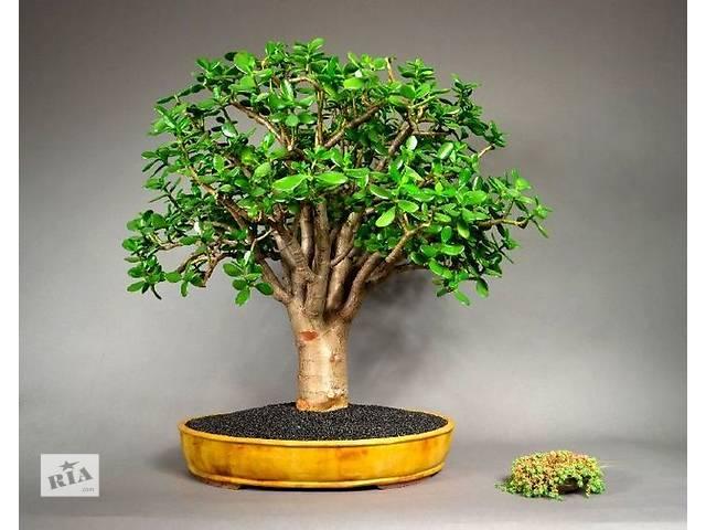 Фото как формировать денежное дерево