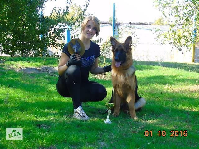 купить бу Длинношерстный щенок немецкой овчарки в Николаеве
