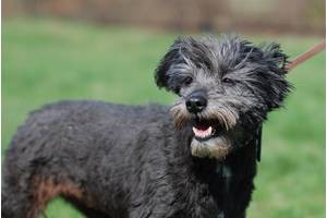 Румба, собака инвалид для людей с большим сердцем.