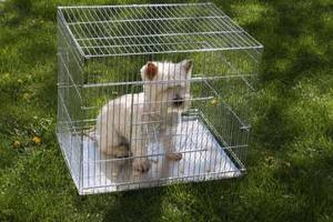 Аксессуары для животных