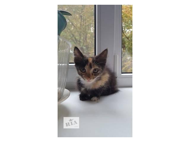 Домашние котята, 2 мес.- объявление о продаже  в Киеве