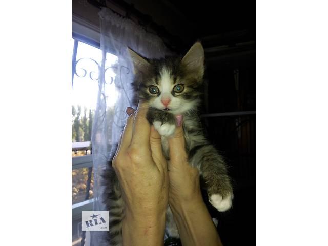Домашние котята в заботливые руки- объявление о продаже  в Одессе