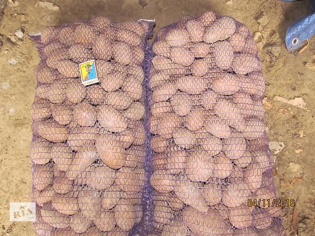 купить бу домашний картофель (без нитратов) в Черниговской области