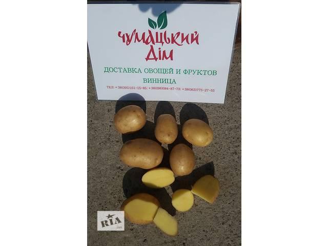 купить бу Домашний картофель с бесплатной доставкой по г. Винница (картошка) в Виннице