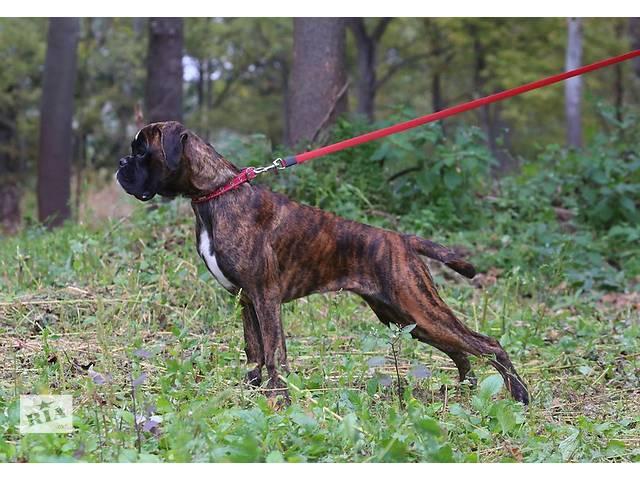 купить бу Дрессировка собак всех пород в Харькове
