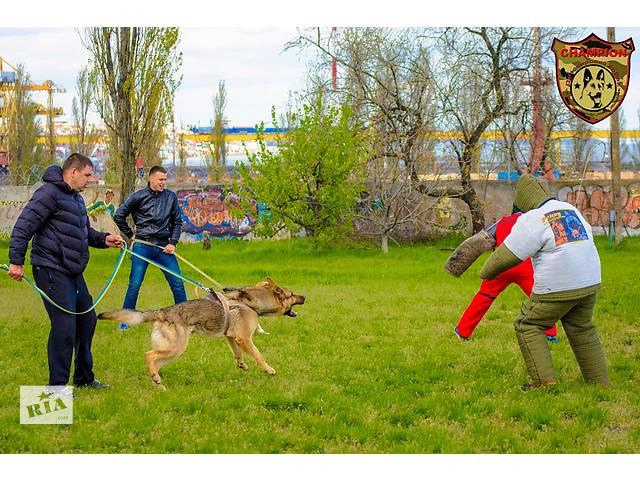 Дрессировка собак Одесса- объявление о продаже  в Одессе