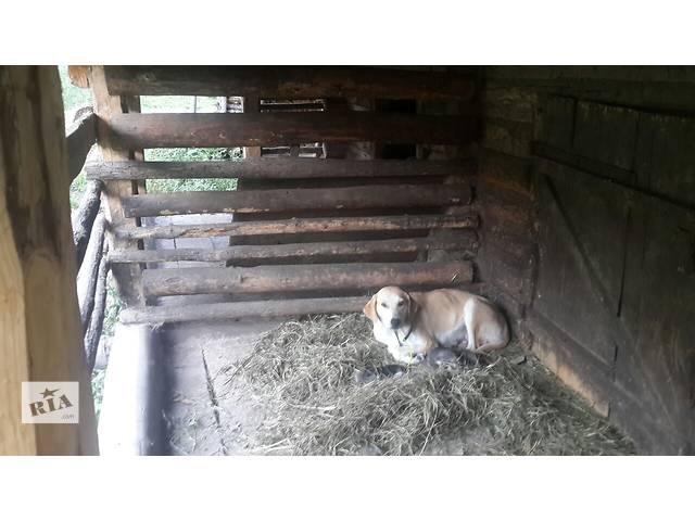 продам Очень красивые щенки бу в Славском